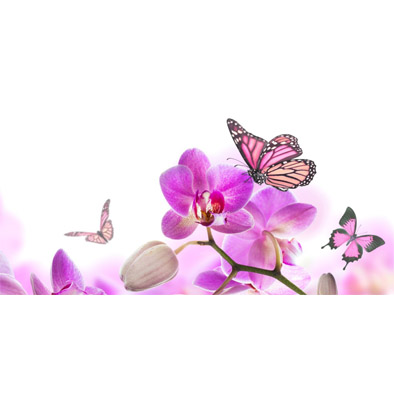 Purple Orchid with Butterfly