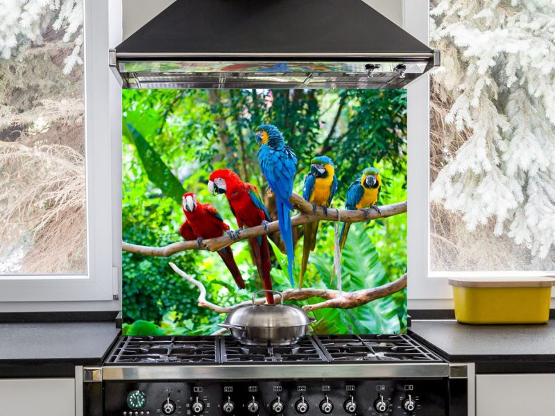 Red and Blue Macaw Resting Hob Splashback